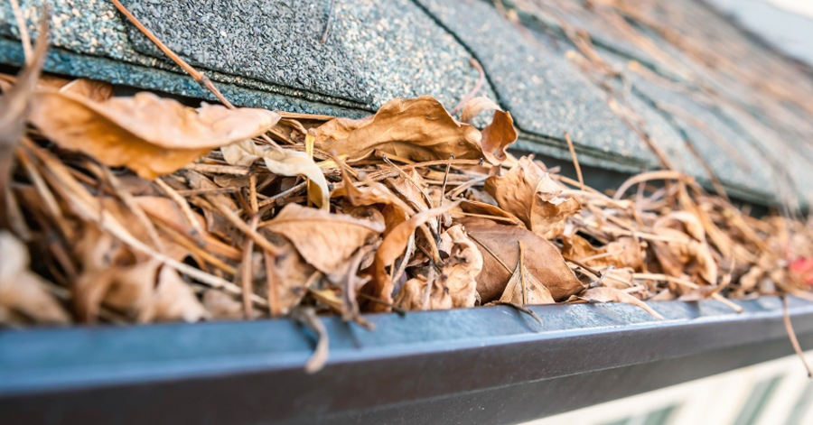 How To Protect Gutters From Leaves Amp Pine Needles Like A Pro